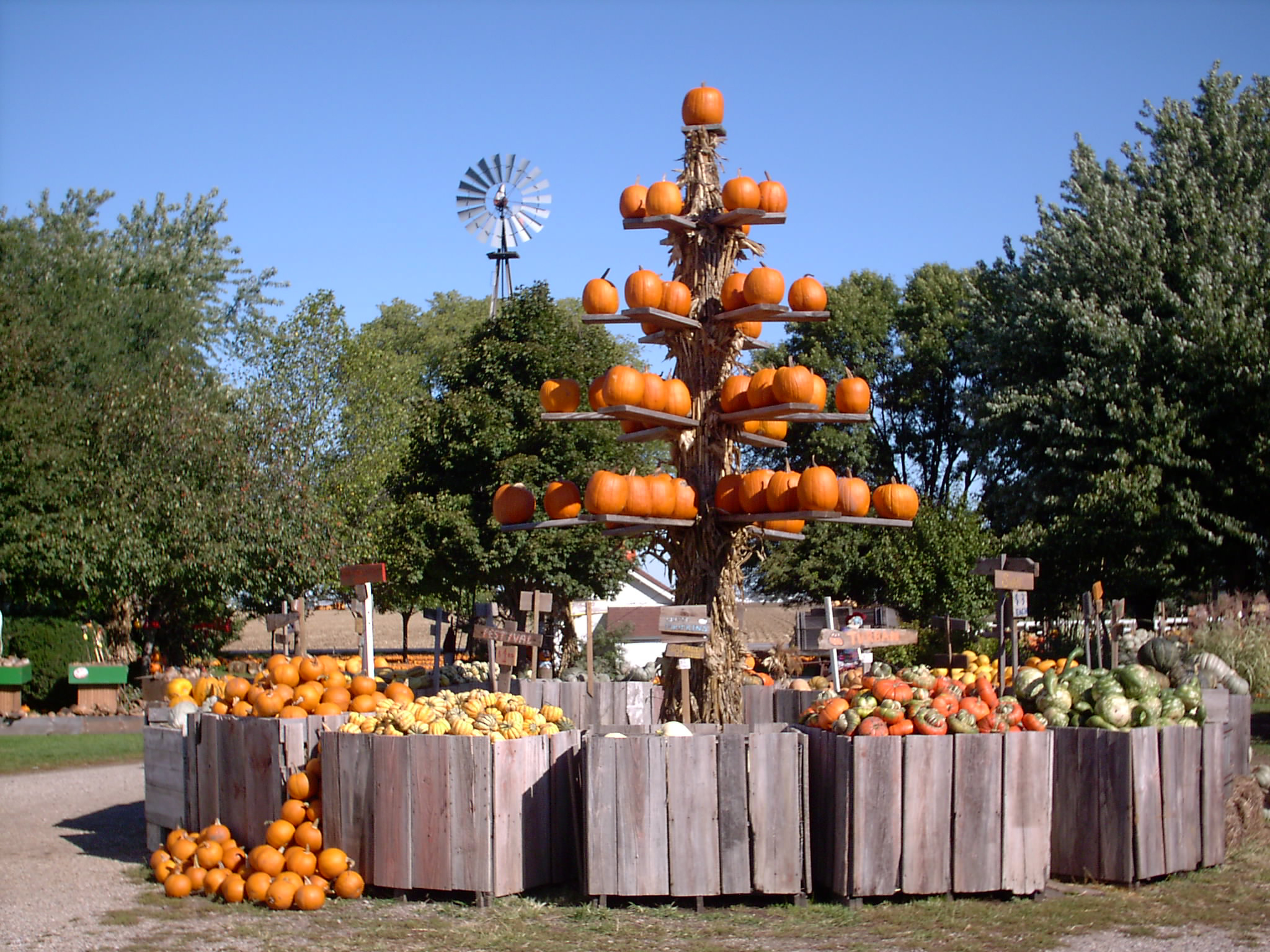 Pumpkins Buckets
